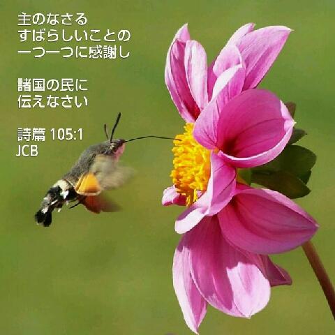 1501629961175.jpg